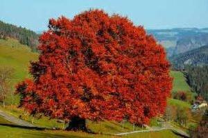 Les saisons colorrées, jpeg