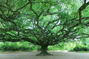 Sur la route du refuge, l'arbre